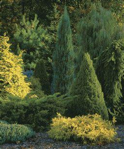 Gartendeko Varel by Die Besten 25 Conifer Plants Ideen Auf