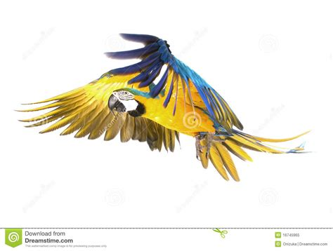 bright ara parrot flying stock image image of beautiful