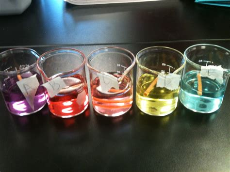 lab bench osmosis and diffusion osmosis and diffusion lab ap biology lab notebookby stephanie strong