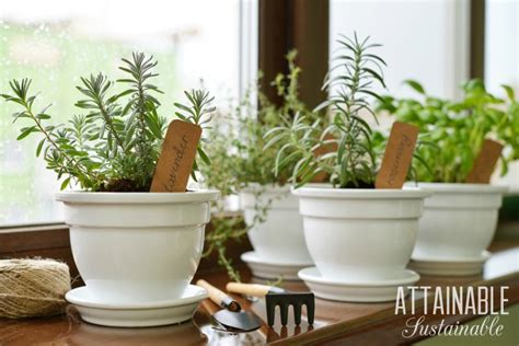 winter garden projects to tackle during the cold days - Winter Garden Projects