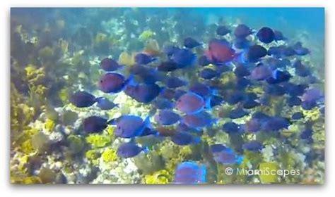glass bottom boat biscayne national park snorkeling at biscayne national park