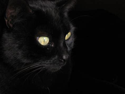 archivo negro jpg inciclopedia la enciclopedia libre de archivo gato negro jpg wikipedia la enciclopedia libre