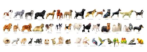 dogs india pet shops for buy sell birds dogs puppies rabbit