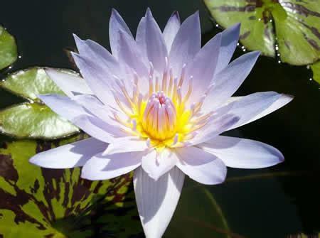 imagenes de flores bonitas para facebook im 193 genes de flores 174 fotos de rosas margaritas o lirios