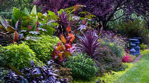 for a palette of warm tones combine large interesting foliage like cannas elephant ear and