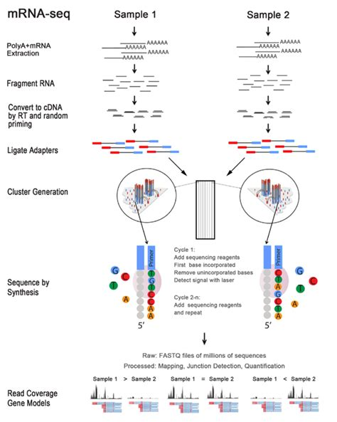illumina sequencing service rna seq 力鈞 威新 ngs次世代定序服務 next generation sequencing services
