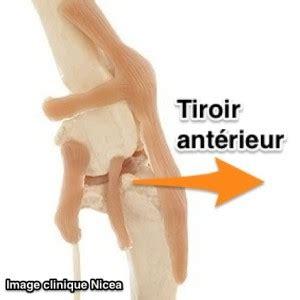 Tiroir Du Genou by La Rupture Du Ligament Crois 233 Du Chien Et Du Chat