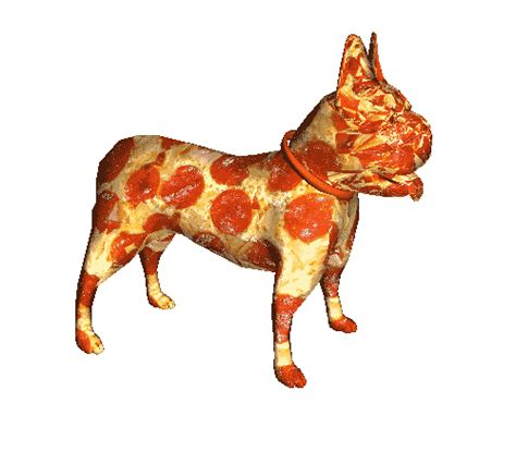 pizza puppy this frenchie is literally made of pizza