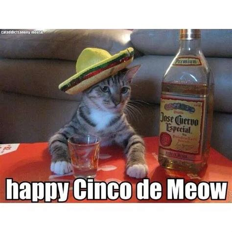 Memes 5 De Mayo - happy cinco de meow cats pinterest