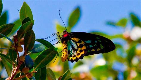 imagenes de mariposas naturaleza significado de las mariposas
