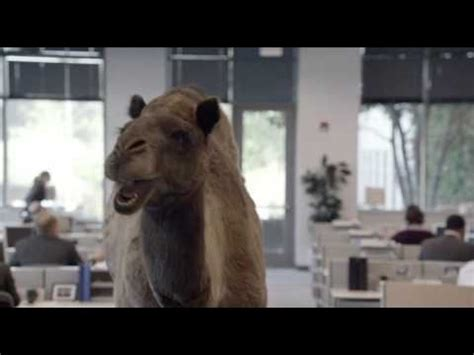 geico camel commercial hump day geico hump day remix quot guess what day it is quot camel final
