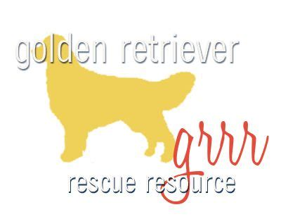 golden retriever rescue toledo ohio 25 best ideas about golden retriever rescue on golden retriever puppies
