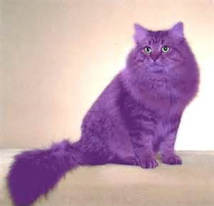 Tyrian Purple by Pix For Gt Purple Cat Purple Pinterest Kitty Cats