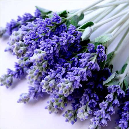 Lavender Buds by Lavender Buds All Things Lavender