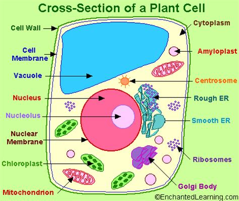 carbohydrates used by plants starch in a plant