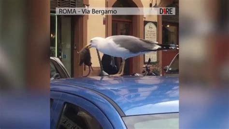 il gabbiano ristorante roma roma il gabbiano banchetta con un topo in piazza fiume