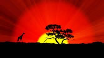 african sunset silhouette giraffe tree crbeno sky sun gold color hd wallpaper