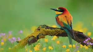 bird wallpaper colorful birds wallpapers first hd wallpapers