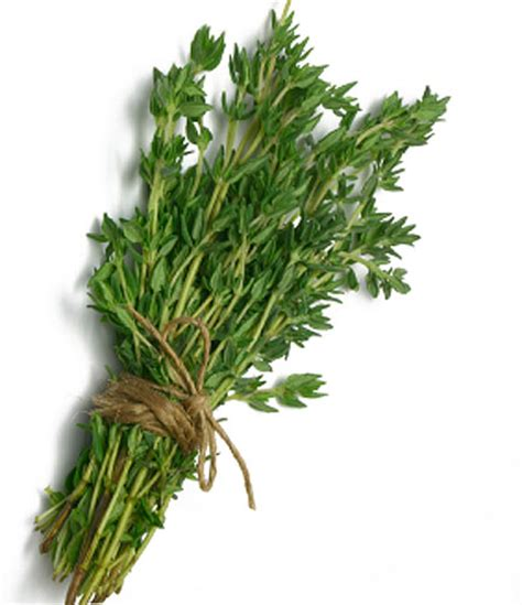 Thyme Herbs thyme nutrition facts health benefits uses substitute pictures