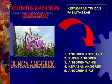 Bibit Buah Naga Biru ppt pkm kewirausahaan pkm k powerpoint presentation
