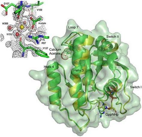h ras protein allosteric modulation of h ras gtpase proteopedia