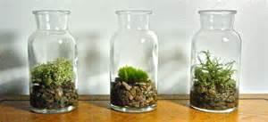 Vase Terrarium Vintage Glass Bottle Plant Vase Or Moss Terrarium