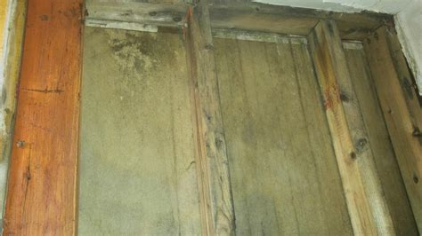 bathroom mold treatment after mold treatment in carteret new jeresy