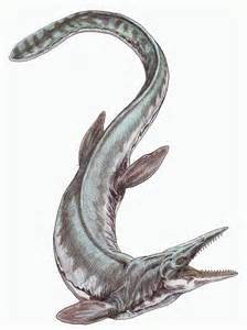 file tylosaurus proriger12db jpg wikimedia commons
