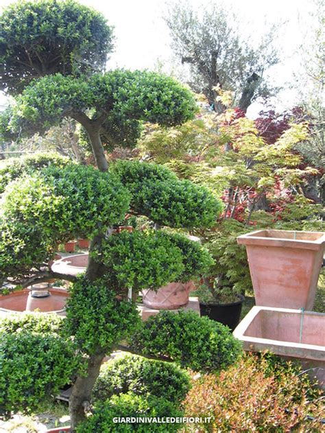 vivai piante da giardino vivaio variet 224 piante fiori per giardino
