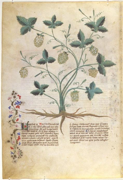 libro the art of botanical 821 best libros de vegetabilibus растения medieval manuscripts botanical images on