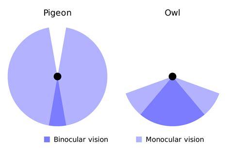 opinions on binocular vision