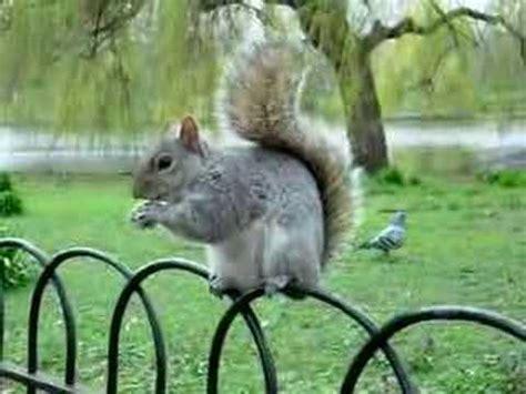 squirrel central image gallery squirrel park