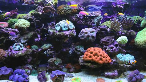 best fish screensaver amazing marine aquarium screensaver