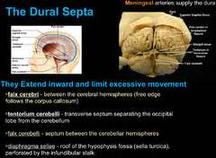 by the great horn spoon flashcards quizlet neurology lecture 3 flashcards quizlet