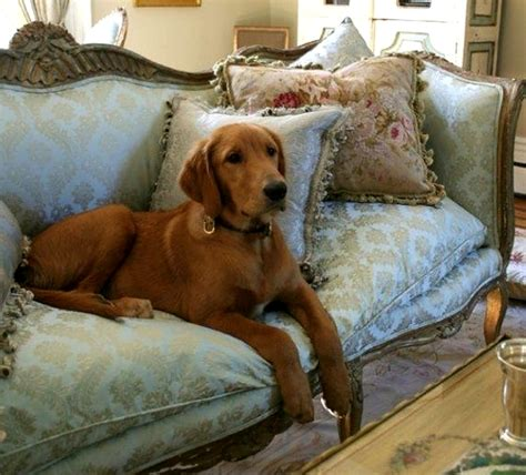 best sofas for dog owners sofa cleaning tips for the end of tenancy of pet owners