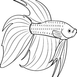 red fish coloring page betta red fish coloring page free other pages red fish