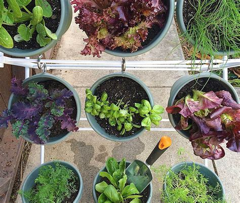 vertical vegetable gardening ideas creative bonnie plants