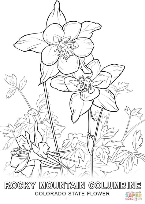 wisconsin flower coloring page colorado state flower coloring page free printable