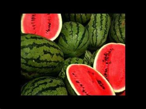Bibit Semangka Kuning Tanpa Biji jual semangka banyuwangi 085742264786 jual semangka tanpa