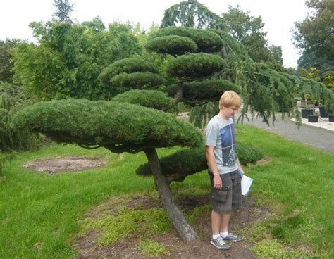garten bonsai selber machen pflanzenspecial gartenbonsai kostbarkeiten japans