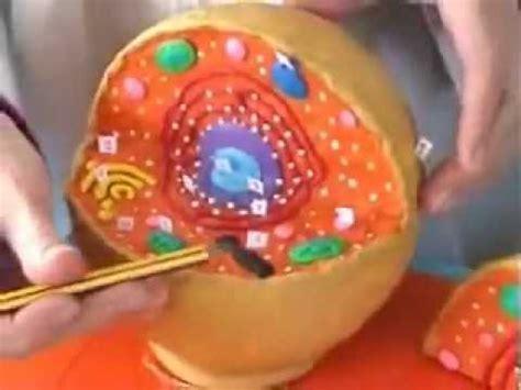 como hacer una celula con dulces estructura de la c 233 lula eucariota animal youtube
