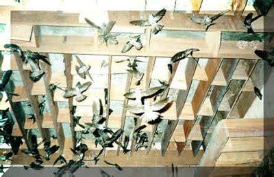 Pakan Burung Walet Terbaik populasi walet baru walet