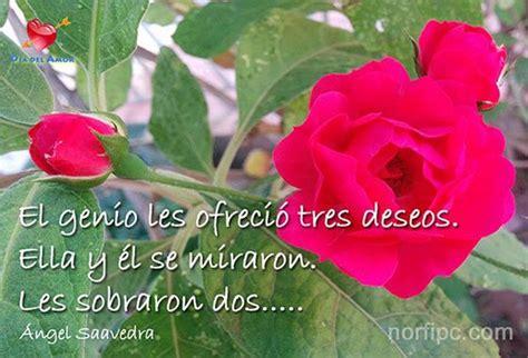 imagenes de rosas lilas con frases fotos de flores y rosas con frases para el d 237 a del amor