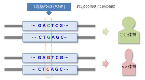 Gene Snp Detox Test by Snp スニップ 1塩基多型 とは 初めての遺伝子検査