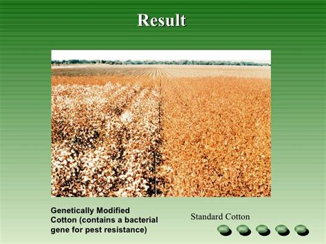 drought resistance definition genetic modified crops