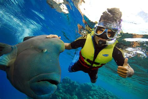 10 best snorkeling spots in the world the best snorkeling spots in the entire world vacaybuddy
