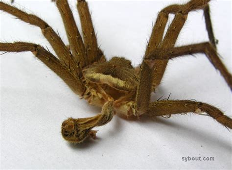 Can Spiders Shed Their Skin by Tropical Garden Animals Spiders Indonesia