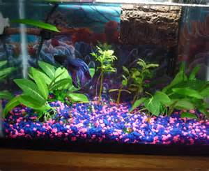 Interior: Excellent Picture Of Decorative Tropical Colorful Fish Tank For Home Interior Design