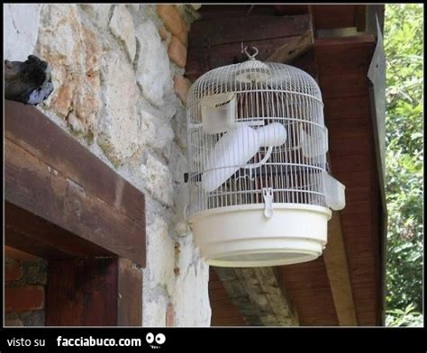 pappagallo in gabbia pappagallo per la pip 236 in gabbia facciabuco