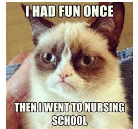 Funny Nursing School Memes - nursing student cat tumblr